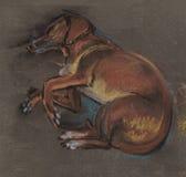 Sleeping dog. The red dog sleeps on the floor Royalty Free Stock Image