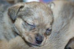 Sleeping dog. A little sleeping dog puppy stock photo