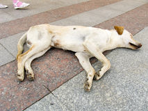 Sleeping dog. The dog sleeps on stone quay in hot day Stock Images