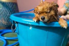 Sleeping dog at Bath Royalty Free Stock Images