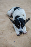 Sleeping dog on the beach Royalty Free Stock Photos