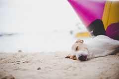 Sleeping dog on the beach near the banana boat. Animal and and V. Acation in holiday concept Stock Images