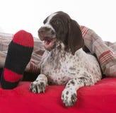 Sleeping with the dog Stock Image