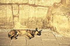 Sleeping Dog Beneath Egyptian Hieroglyphics at Karnak. Royalty Free Stock Photography