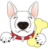 Sleeping dog with bone. Sleeping white muzzle of bull terrier hold a bone on his mouth Stock Image