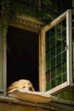 The sleeping dog of Bruges. Belgium Royalty Free Stock Photo