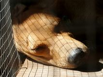 Sleeping dog in cage Royalty Free Stock Photo
