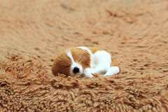 A sleeping dog at the carpet. A sleeping dog at the carpet, as background Royalty Free Stock Images