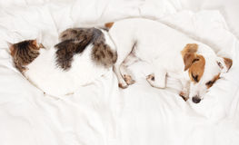 Sleeping dog and cat at bed Stock Photography