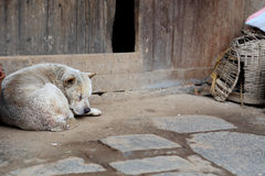A sleeping dog Royalty Free Stock Images
