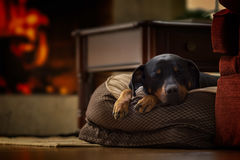 Sleeping Dog. A dog sleeping by the fire Royalty Free Stock Image