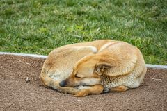 Sleeping dog on floor in nature stock images