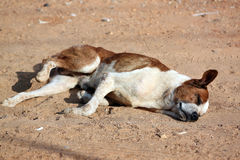 Sleeping Dog on the ground. Stock Photos