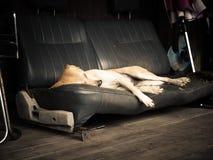 Sleeping dog Stock Photo
