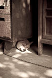 Sleeping dog. With light and shadow Royalty Free Stock Images
