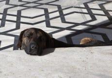 Sleeping dog on the marble floor near the Blue Mosque. Istanbul. Turkey. Royalty Free Stock Photos