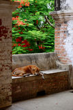 Sleeping dog on old weathered brick bench Stock Images