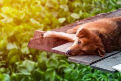 Sleeping dog but open eyes stock image