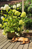 Sleeping dog outdoor Stock Photo