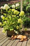 Sleeping dog outdoor Stock Photo