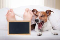 Sleeping dog and owner Stock Photo