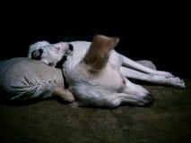 Sleeping dog and puppy stock photo