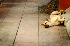 Sleeping dog in the sidewalk Royalty Free Stock Photography