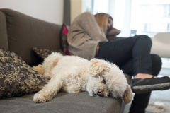 Sleeping Dog, Sleeping Owner Stock Photos