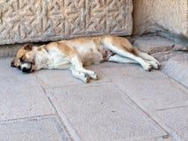 Sleeping dog in  the Sultanhani caravansary on the Silk Road, Royalty Free Stock Photos