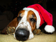 Sleeping dog wearing a santa hat Stock Photography
