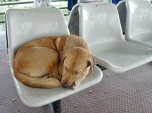 Sleeping stray dog on white seat on thepier Royalty Free Stock Image