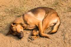 Sleeping dogs Royalty Free Stock Photography
