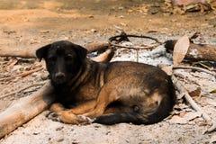 Sleeping dogs. Dog lying on the ground Stock Photography