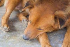 Sleeping Dogs stock photos