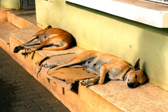 Sleeping dogs Royalty Free Stock Image