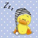 Sleeping Duck Stock Image