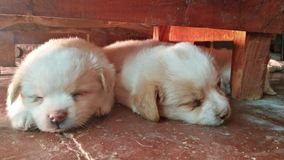 Sleeping Duo Under the table royalty free stock photos