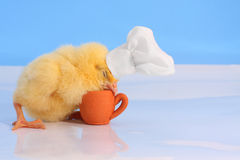 Sleeping on duty... A baby chick with cookers hat sleeping over the small terracotta cup. Studio simulated polar scene Royalty Free Stock Photos
