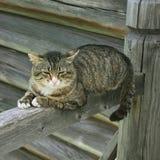 Sleeping fat cat Royalty Free Stock Photo
