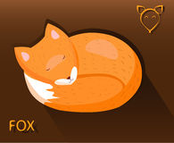 Sleeping fox put a muzzle on the tail. One fox curled up asleep with his head on the tail Stock Photo