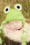 Sleeping frog stock photos