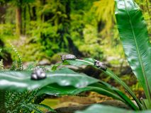 Sleeping frogs on jungle leaves royalty free stock image