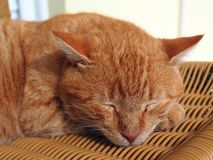A Sleeping Ginger Cat Stock Photo