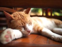 Sleeping ginger tom cat Royalty Free Stock Photo