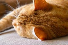 Sleeping ginger tomcat - perfect dream.  royalty free stock photos