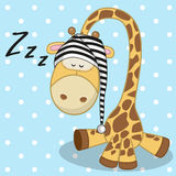 Sleeping Giraffe Royalty Free Stock Photography