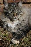 Sleeping gray cat stock image