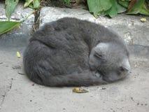 Sleeping gray cat Stock Photo