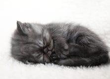 Sleeping gray kitten Royalty Free Stock Image