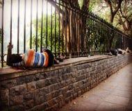 Sleeping guys. Allee of sleeping guys near the Chandni Chowk stock photos